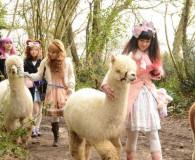 Dunreyth Alpaca Walk